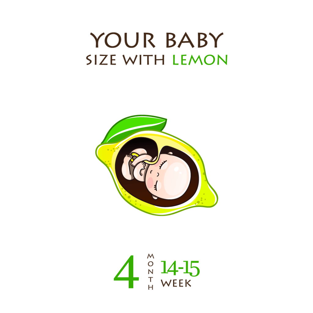 The baby is curled and has his or her limbs tightly folded around week 17.