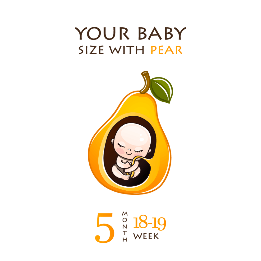The fetus is considerably bigger and your bump is now noticeable at week 22.