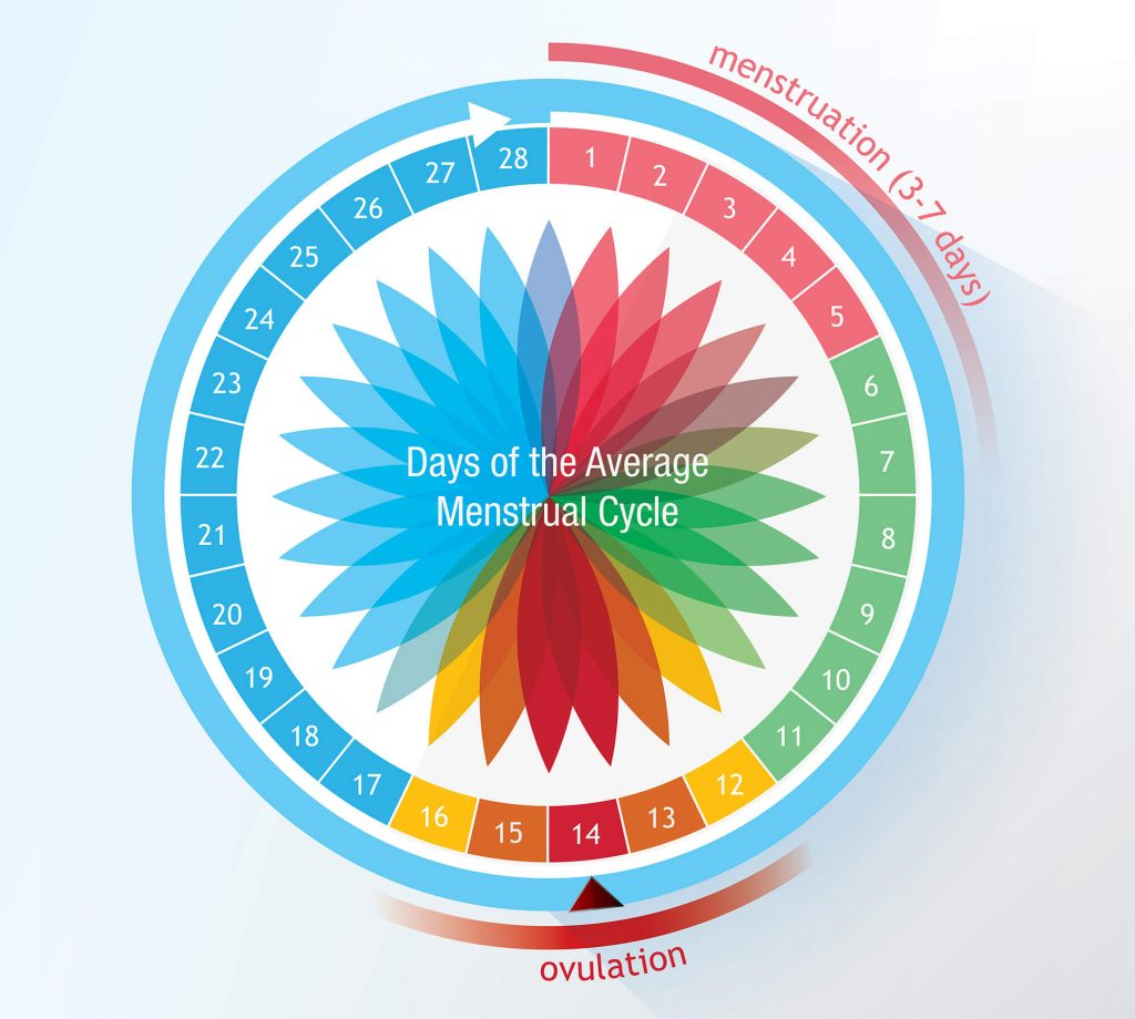 A 28 days ovulation cycle chart like this helpful as a pregnancy calculator.